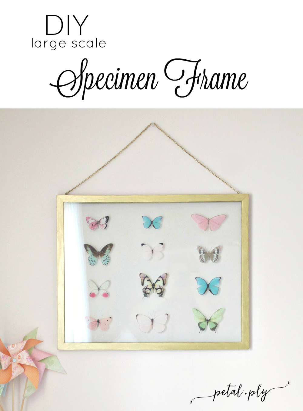 wm-DIY-large-scale-specimen-frame-pinnable
