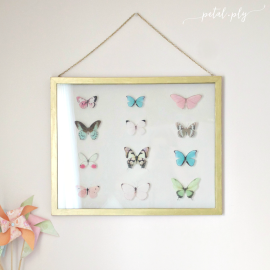 DIY Large Scale Specimen Frame