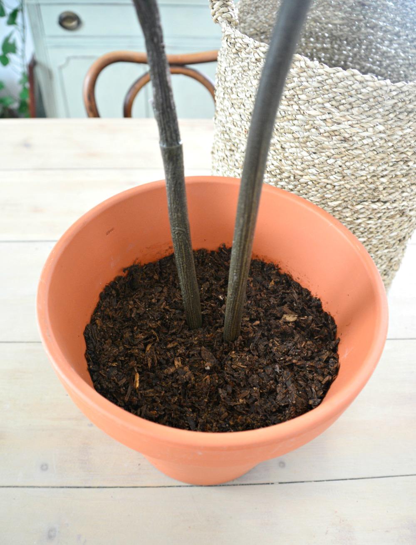 craft-soil