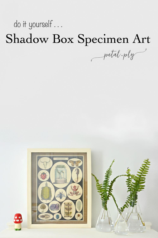 DIY-shadow-box-specimen-art-pin