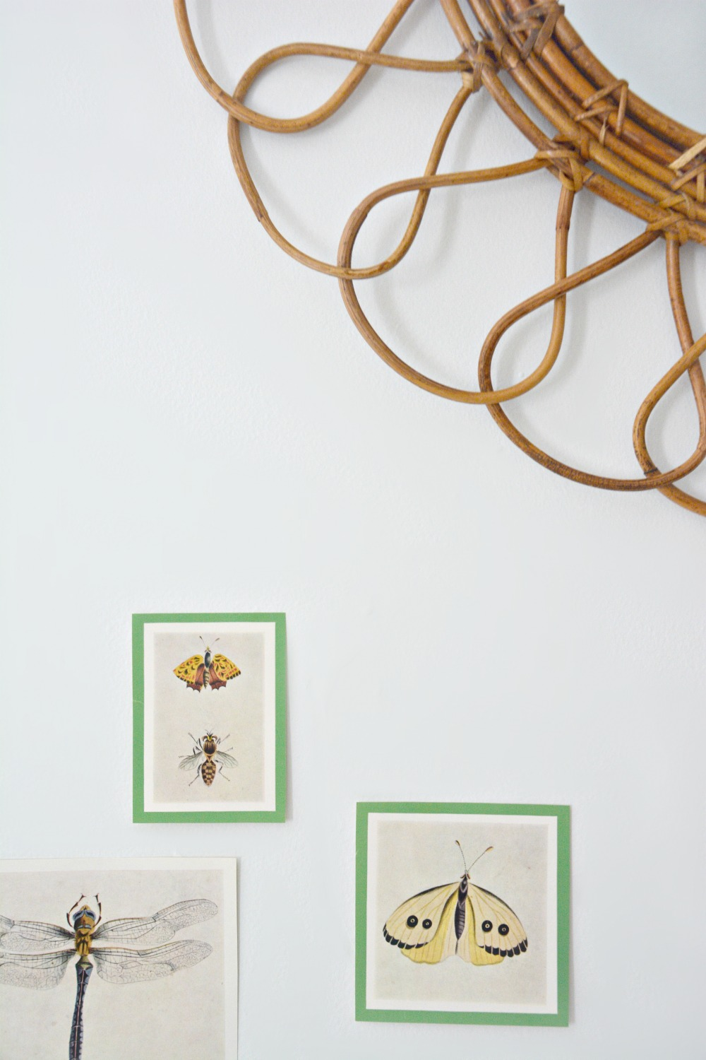 insect-book-plates-rattan-mirror