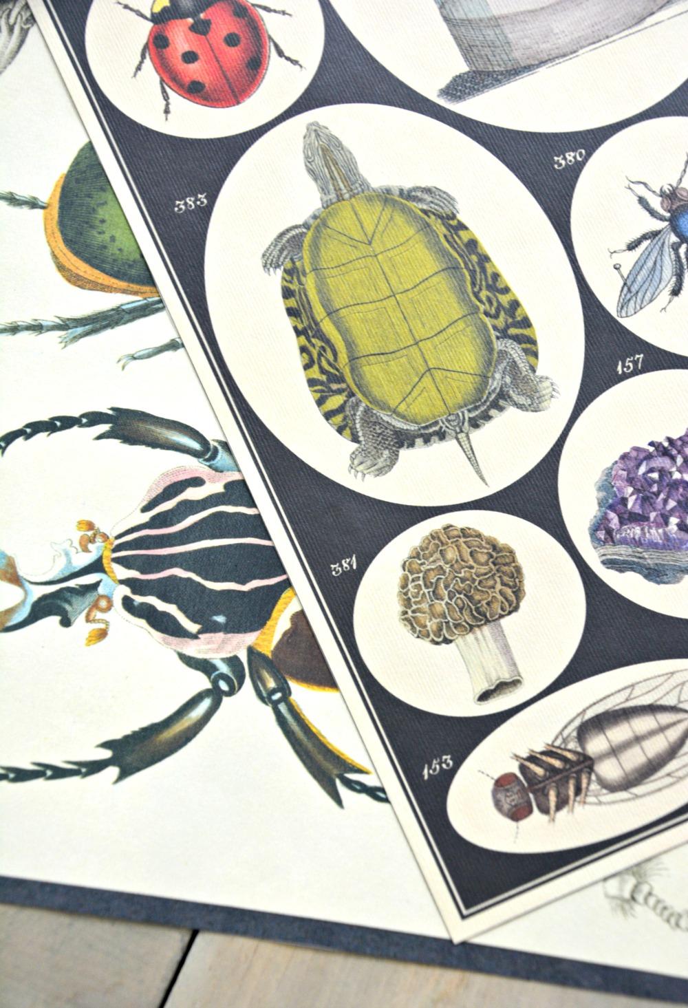 insect-curiousities-calendar-art