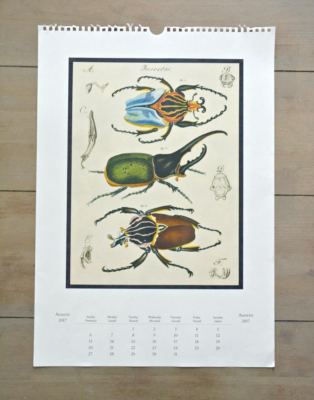 specimen-calendar-page