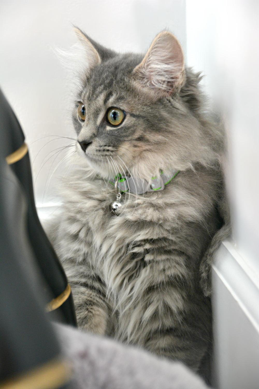 Jingle-Kitten-1