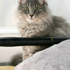 Meet Jingle + The Ultimate Kitty Cat Gift Guide